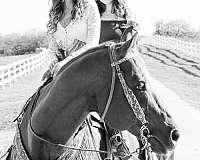 sorrel-rodeo-horse