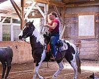 paint-horse-for-sale