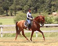 youtube-video-andalusian-horse