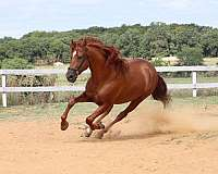 youtube-video-horse
