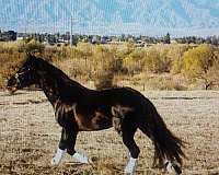 black-horse-for-sale