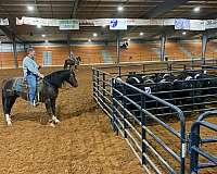 chestnut-calf-roping-horse