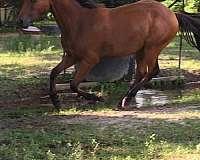 bay-roping-horse