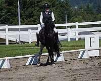 working-equitation-horse