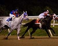 racehorse-quarter-horse