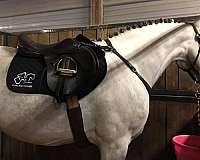 youtube-video-irish-draught-horse