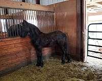 fahna-b-book-stallion
