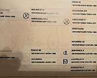 tall-horse