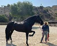 large-horse