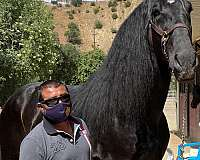 stud-service-andalusian-horse