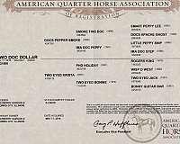 buckskin-foundation-bred-performance-horse