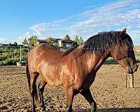 ialha-andalusian-horse