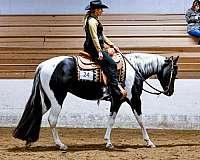 the-cash-button-paint-horse