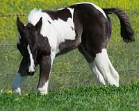 sonnys-amigo-bar-paint-horse