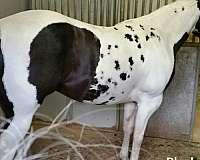 painted-tru-paint-horse