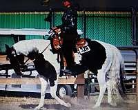 cr-black-buttons-paint-horse