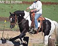 color-producer-paint-horse