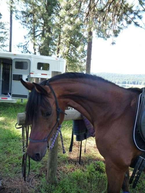 Horse Property For Sale In Medford Oregon