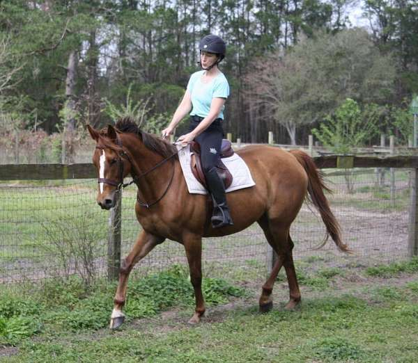 thin-blaze-right-front-pastern-white-horse
