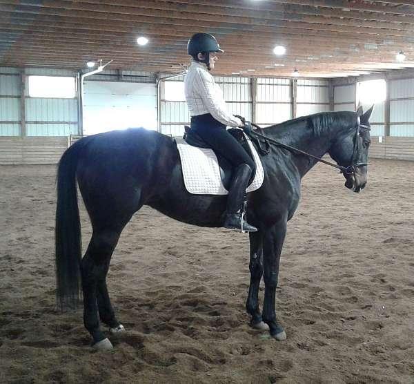 equitation-thoroughbred-horse
