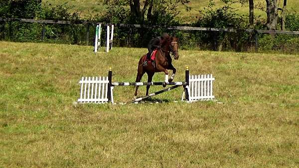 works-thoroughbred-horse