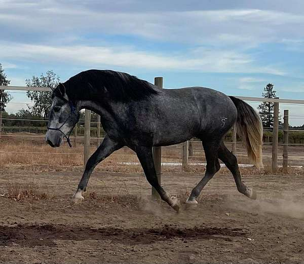 champion-bloodlines-horse