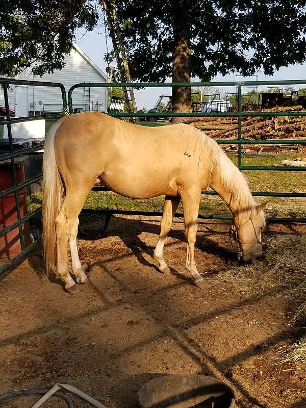 palomino-blaze-four-white-socks-horse