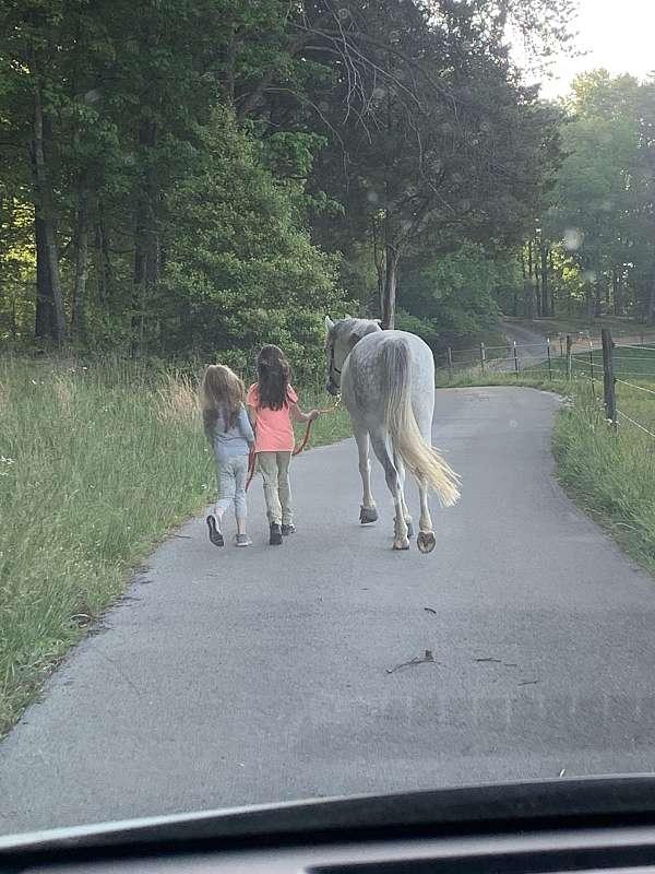 around-welsh-pony
