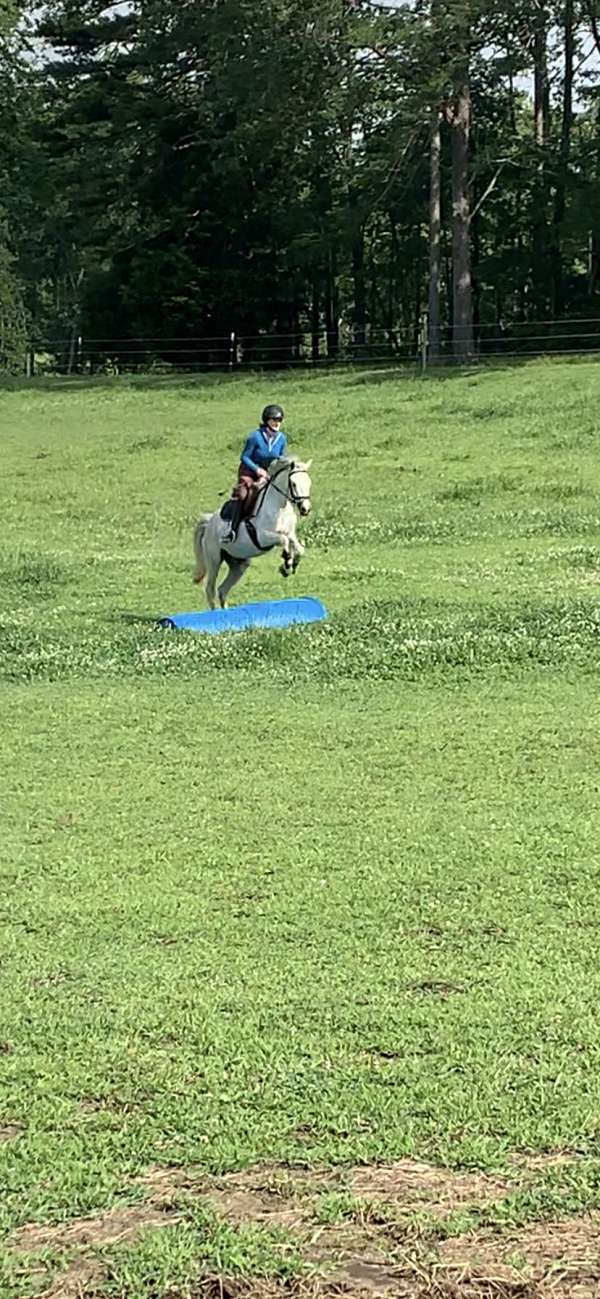 schooling-welsh-pony