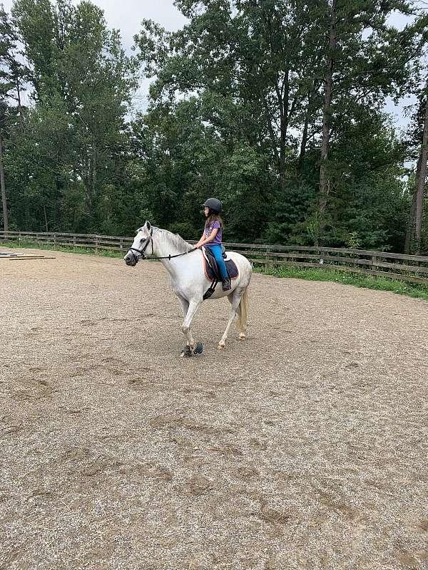 super-safe-welsh-pony