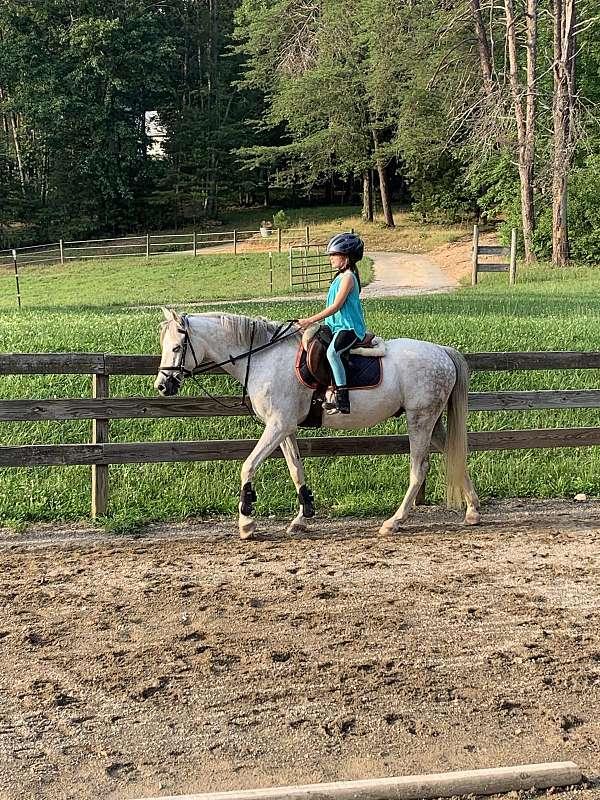 little-welsh-pony
