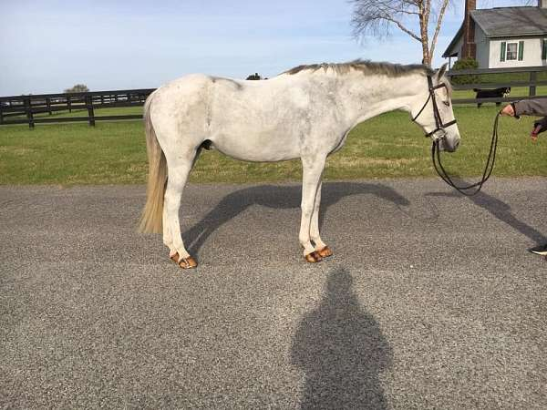 events-welsh-pony