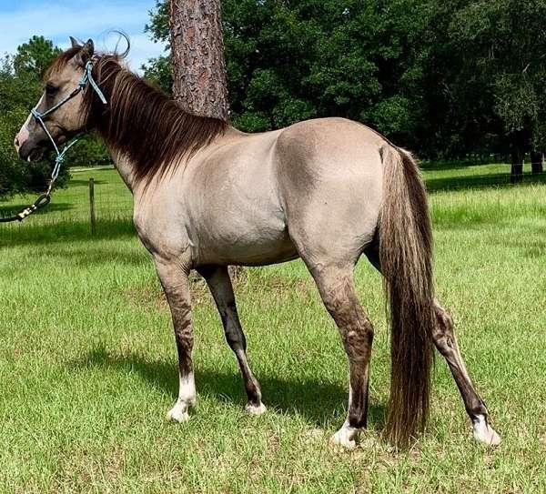 grulla-grullo-horse