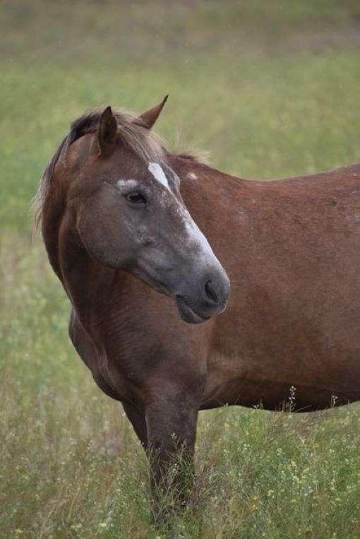 companion-halter-mustang-horse