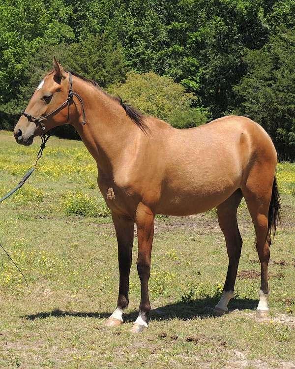 metallic-akhal-teke-horse