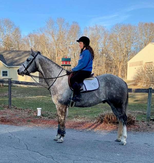 all-around-paint-horse