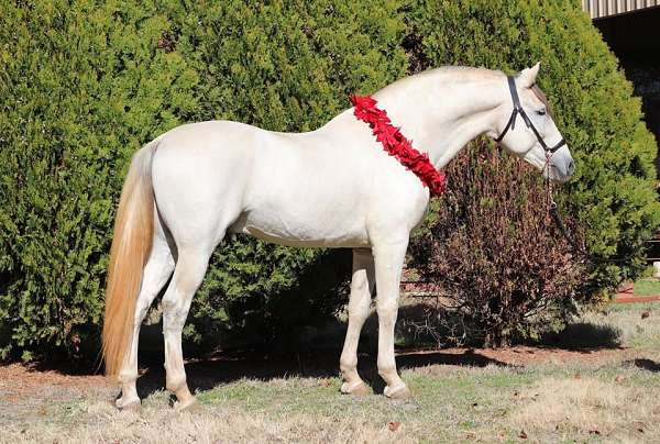 magnificent-andalusian-horse