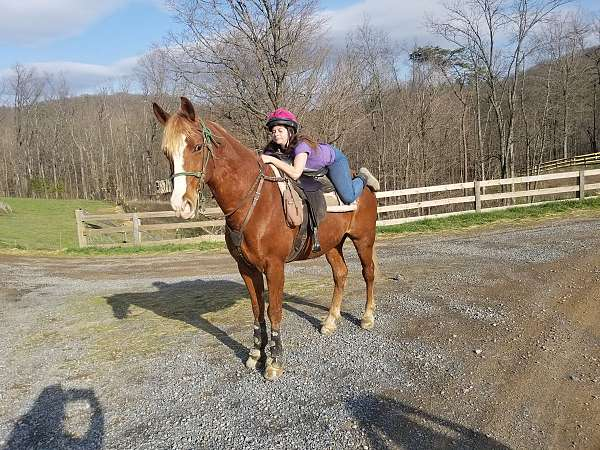 horse-for-sale-racking
