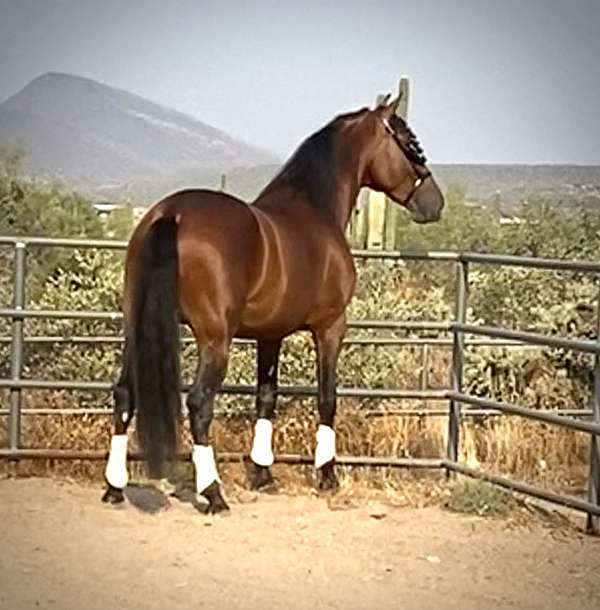 riding-in-lightness-andalusian-horse