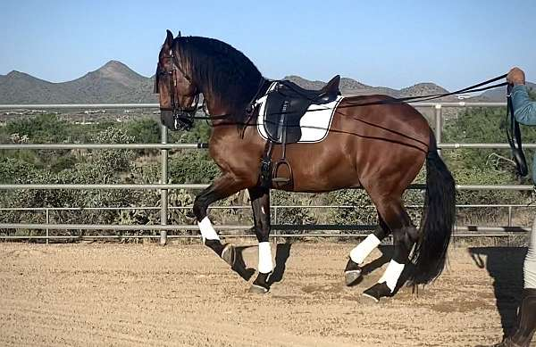 reins-andalusian-horse