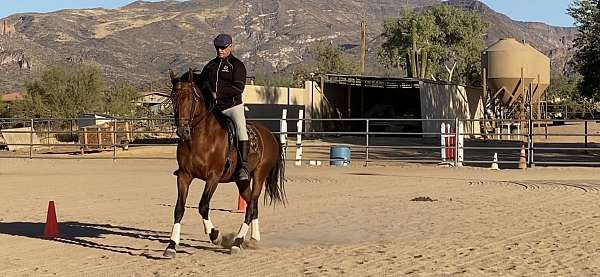long-reins-andalusian-horse