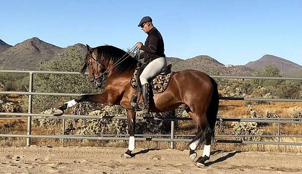 good-conformation-andalusian-horse