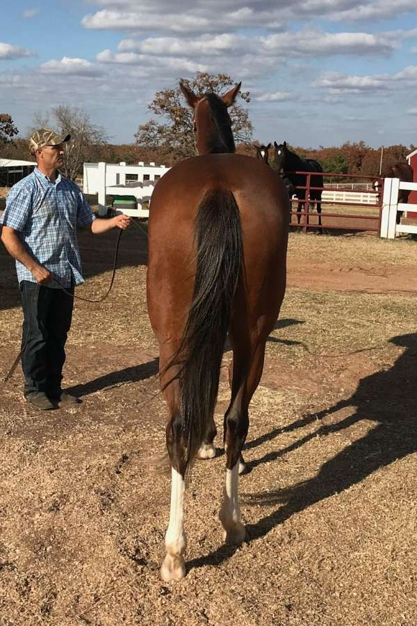 excellent-prospect-filly