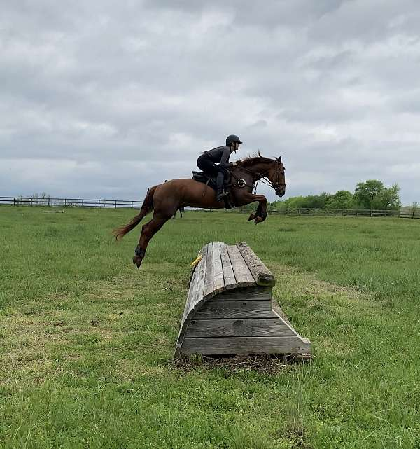 thoroughbred-mare