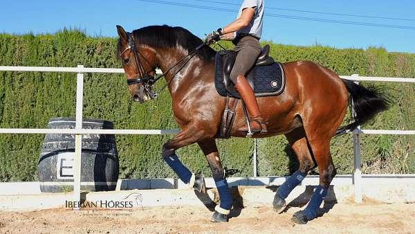 piro-free-horse