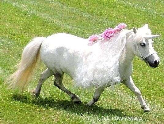 driving-miniature-horse