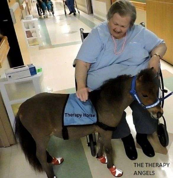 flashy-miniature-horse