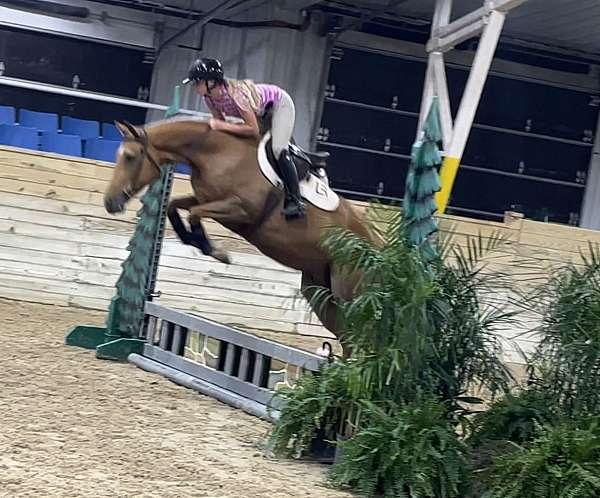 athletic-palomino-warmblood-horse