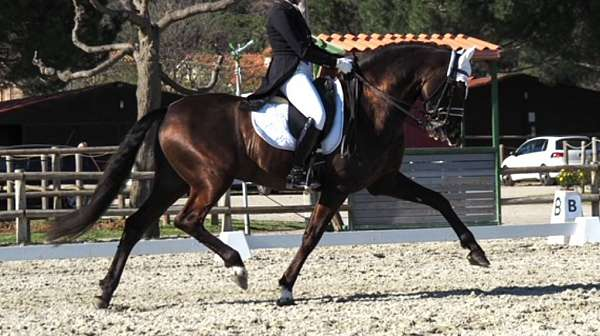 young-riders-andalusian-horse