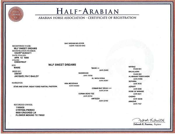 style-half-arabian-horse